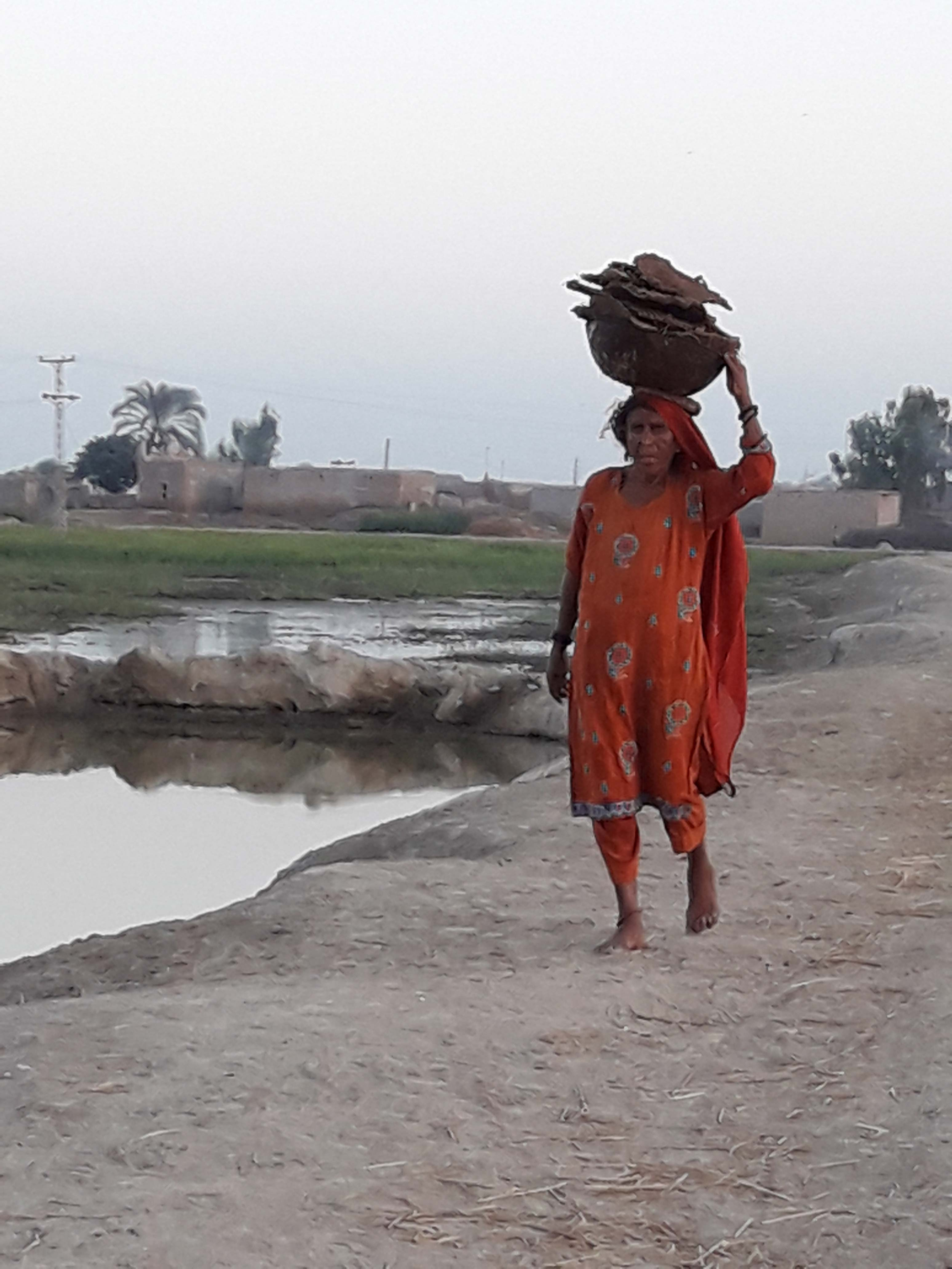 A woman carries dried buffalo dung cakes to her home in Village Misri Chahwan to fuel her stove.